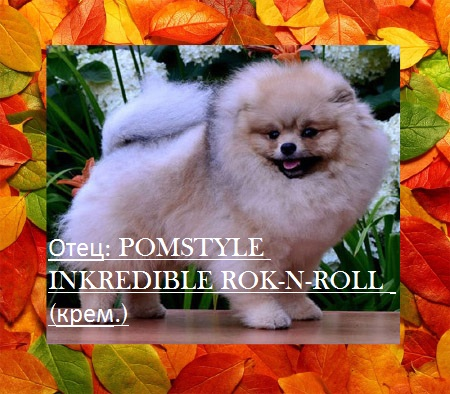 POMSTYLE INKREDIBLE ROK-N-ROLL  5